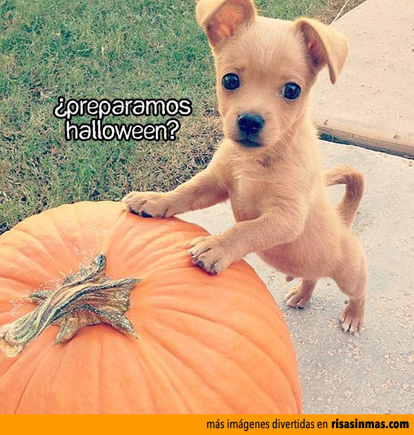 ¿Preparamos Halloween?