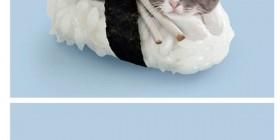 Sushi de gatos