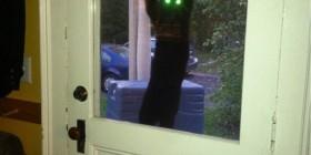 Tu gato quiere entrar