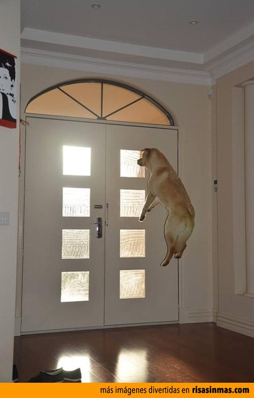 Tu perro esperándote en casa