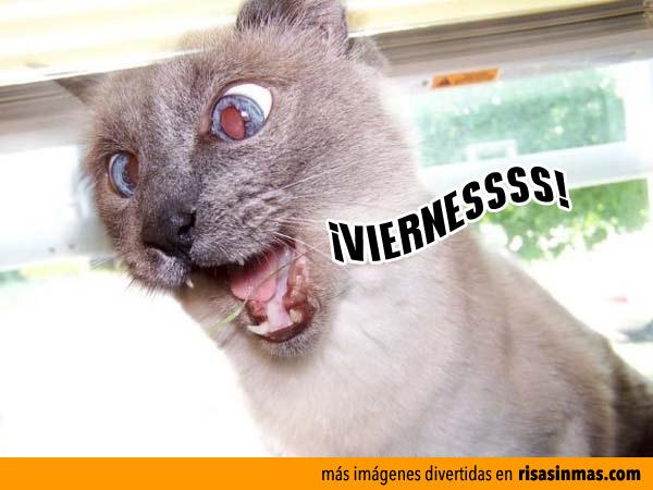 ¡VIERNESSSS!