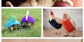 Animales con jerseys