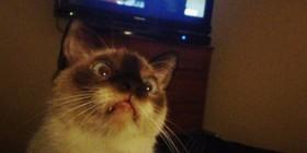 Gato impresionando por Breaking Bad
