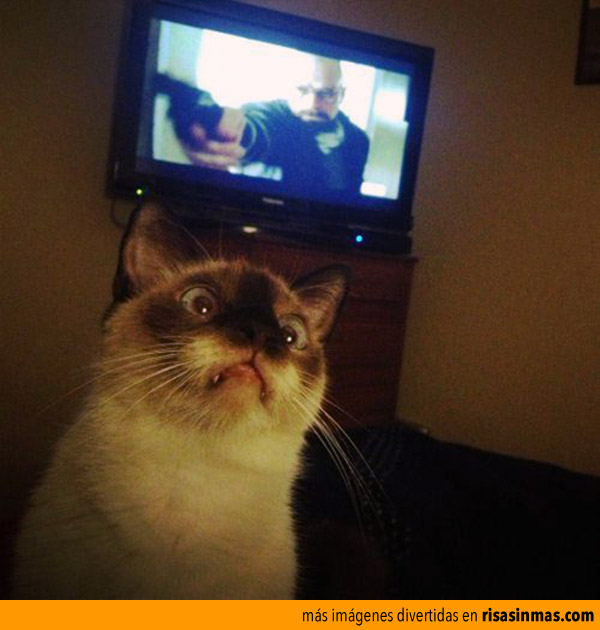 Gato impresionando por Breaking Bad