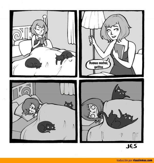 Buenas noches, gatitos