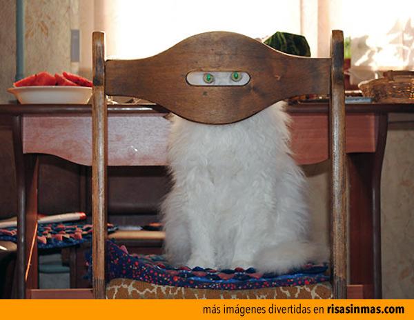 Gato ninja nivel 10