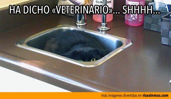Ha dicho veterinario