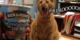 Gato viendo un helado