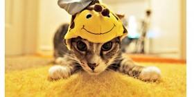 Gatos con gorritos