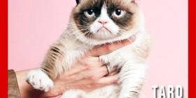 ¡Grumpy cat es portada de TIME!