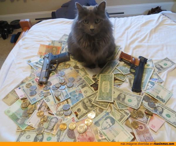 La influencia de GTA 5 en nuestros gatos