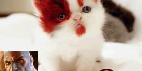 Kratos, kitten of war