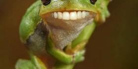 La ranita sonriente