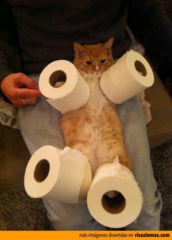 Los gatos y el papel higiénico