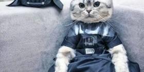 Luke, yo soy tu gato
