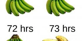 Maduración de los plátanos