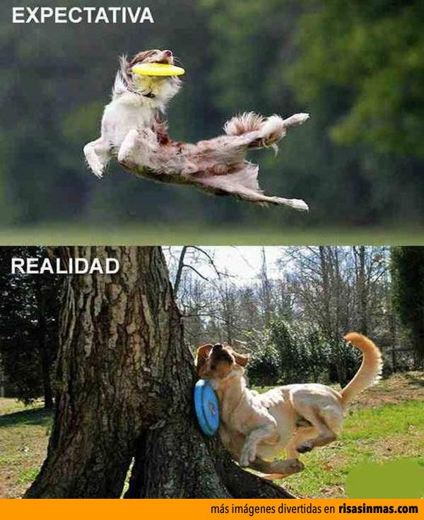 Mi perro y el frisbee