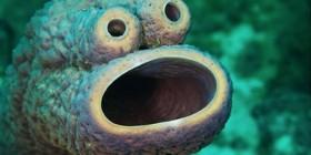 Encontrado el monstruo de las galletas del mar