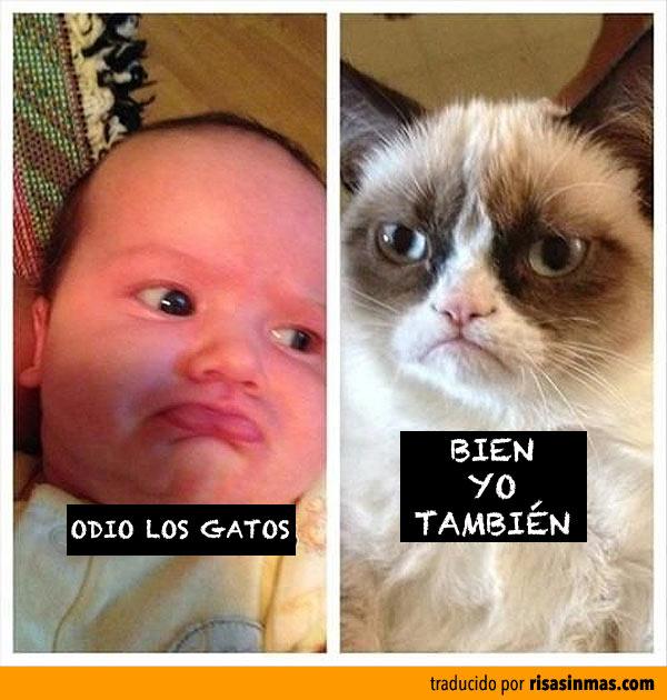 Odio los gatos