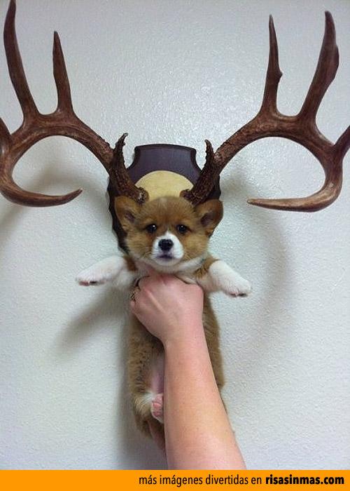 Perrillo trofeo de caza