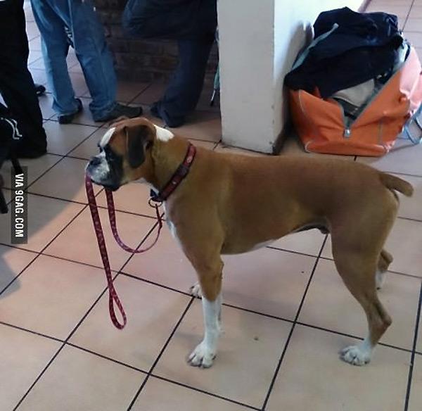 Perros que se sacan de paseo