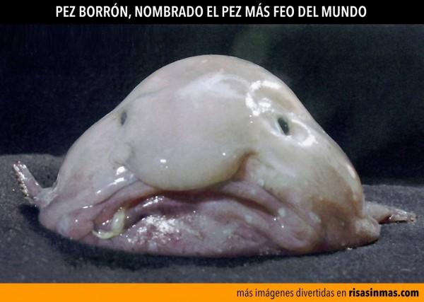 Pez borrón, el pez más feo del mundo