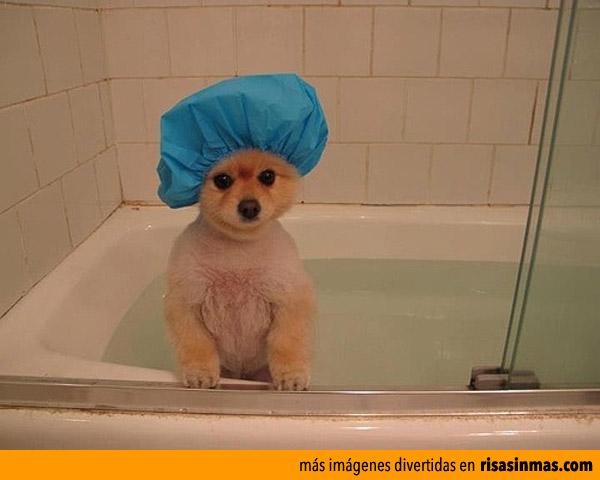 Preparado para ducharme