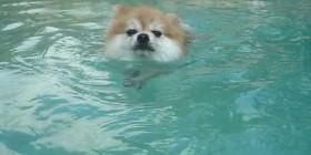 Tristan nadando