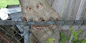 Árbol zombie