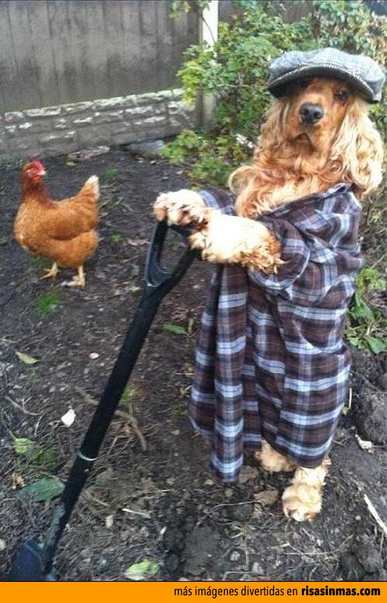 Arreglando el jardín