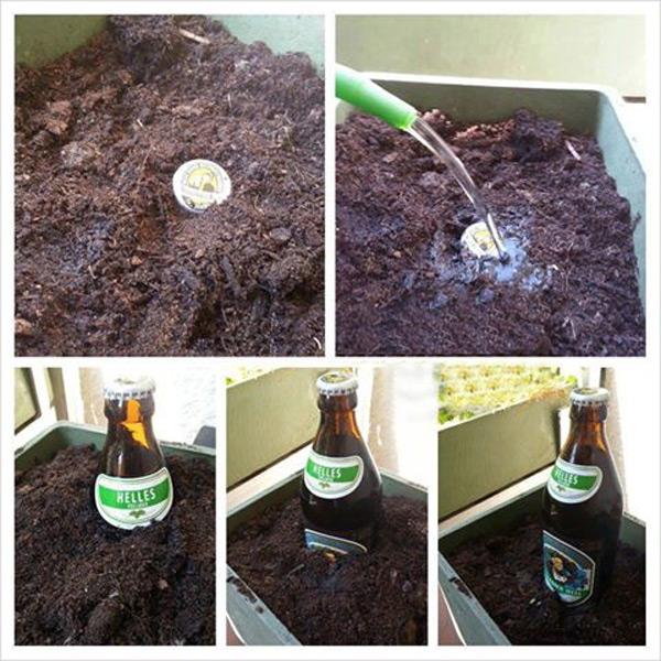 Así se hace la cerveza