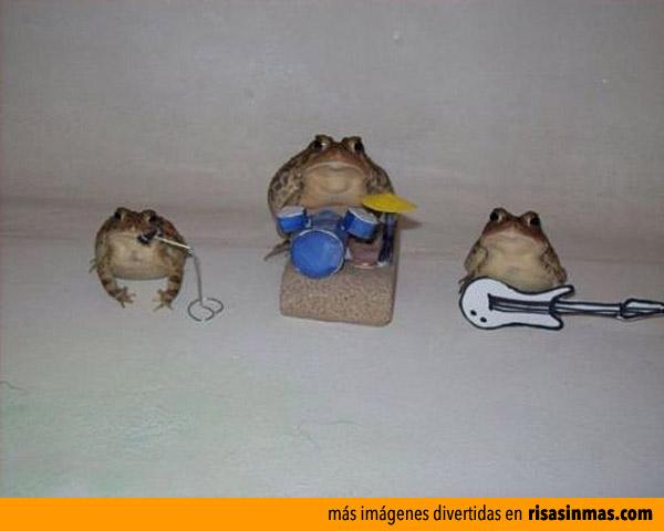 Banda de rock de ranas