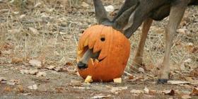Ciervo preparado para Halloween