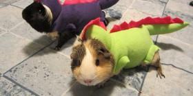 Cobayas disfrazados para Halloween