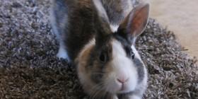 Conejo haciendo pilates