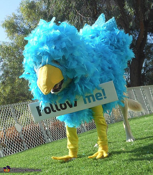 Disfraz de Twitter