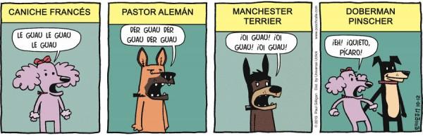 Distintas razas de perros