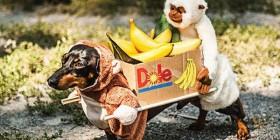 Dos monos llevando una caja de plátanos