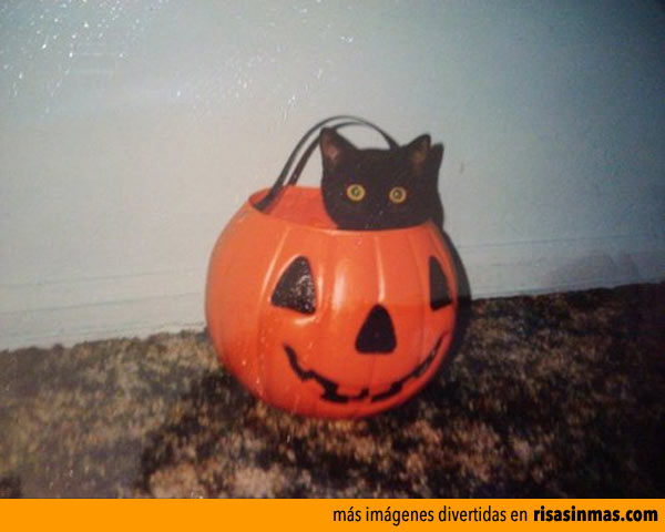 Esperando Halloween