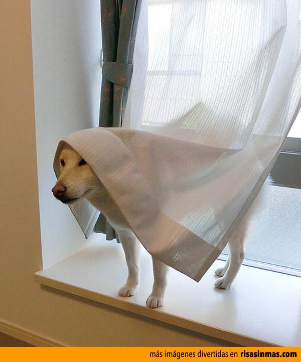 Este año me disfrazo de fantasma