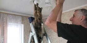 Gato cambiando una bombilla