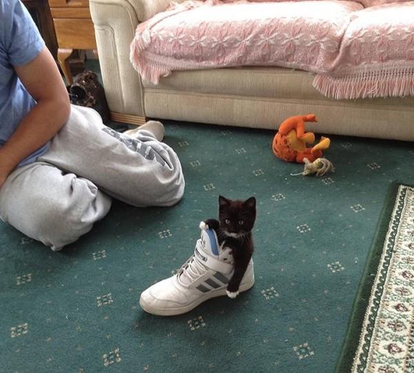 Gato probándose las zapatillas