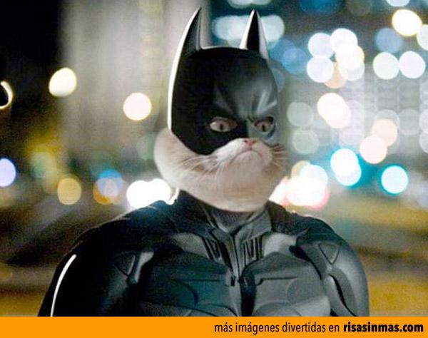 Grumpy cat será el nuevo Batman