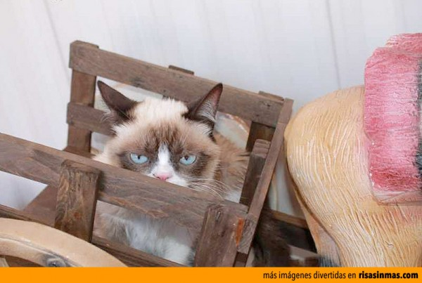 Grumpy cat te vigila