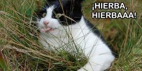 ¡Hierba, Hierbaaa!