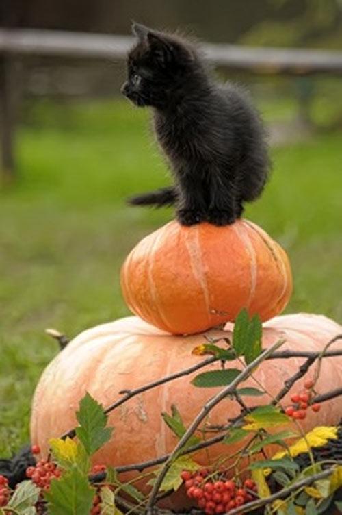 Imagen tierna de Halloween
