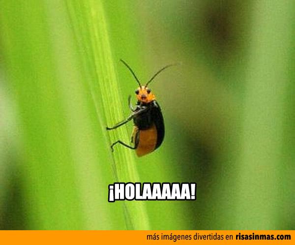 Insecto saludando a la cámara
