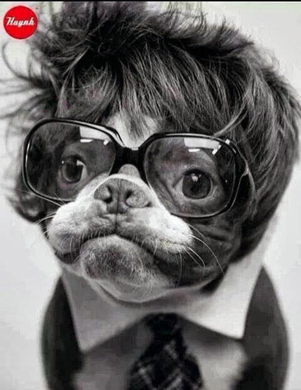 La moda hipster llega a los perros