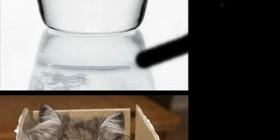 Los gatos son fluídos