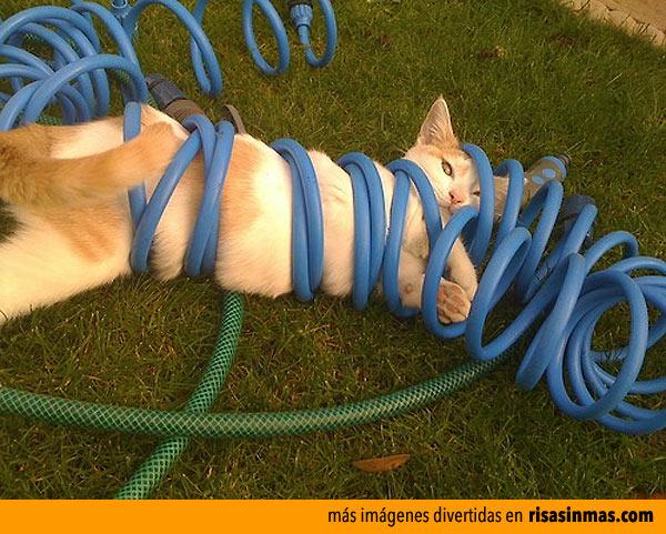 Los gatos y sus líos